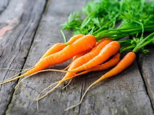 نکات مهم در خصوص هویج