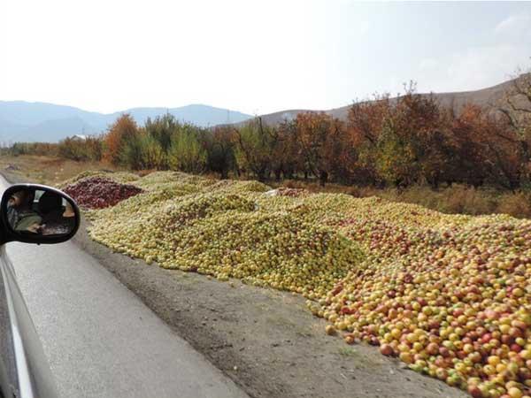 ممنوعیت انباشت سیب در کنار جاده