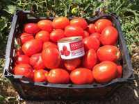 گوجه فرنگی دلار F1